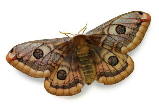 Devon Pest Control Moth Control Amp Moth Treatments In Devon