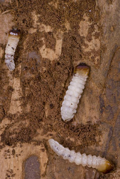 Devon Pest Control Woodworm Control Treatments